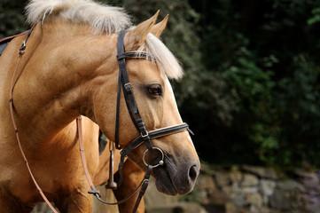 Head of horse.