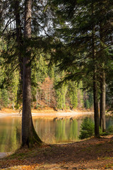 pine forest and lake near the mountain early in the morning