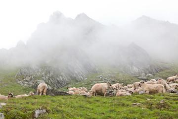 herd in the clouds