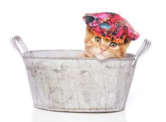 cat in a bath with shower cap