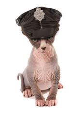 stripper kitten