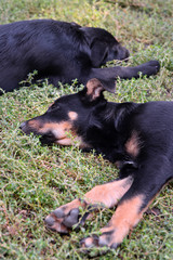 Two stray puppies, Kiev