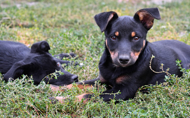 Portrait of two stray puppies, Kiev