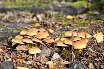 Pilze im Stadt