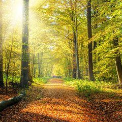 Fototapeta Sunny autumn forest