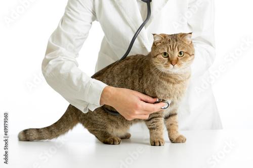 cat vet care