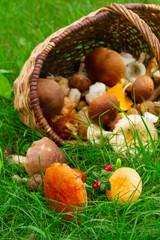 ripe of mushrooms