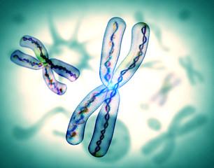 microscopic view of chromosome x