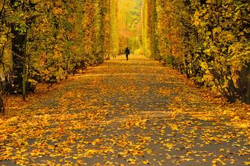 Fototapeta Krajobraz wiejski, jesień obraz