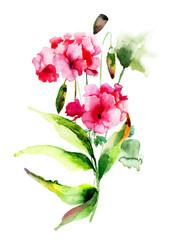 Geranium and Poppy flowers