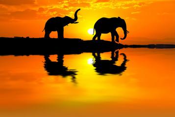 elefantes paseando por el lago