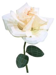 White rose flower. Vector illustration with visible mesh