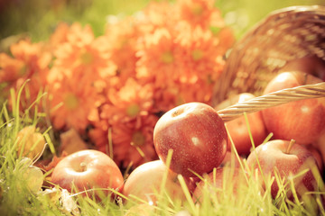 Fruits and flowers in autumn