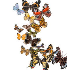 Butterflies with free space for your text