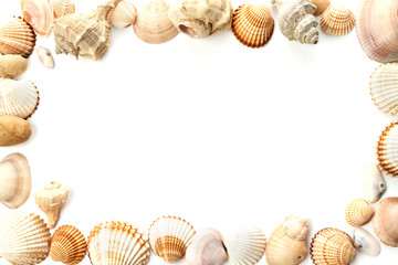 frame of conch sea shells