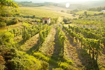 Foto op Canvas Ballon Chianti vineyard landscape in Tuscany, Italy
