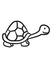 Kleine süße niedliche Schildkröte
