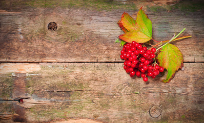 viburnum on vintage wooden boards background autumn concept