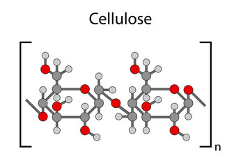 Structural chemical formula of cellulose polymer