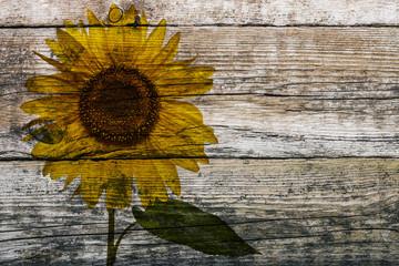 Holzwand mit Sonnenblume