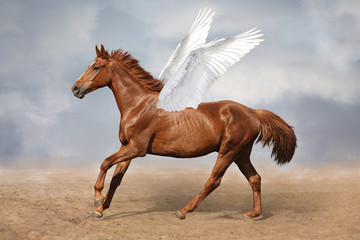 Beautiful brown pegasus horse galloping wild on sky