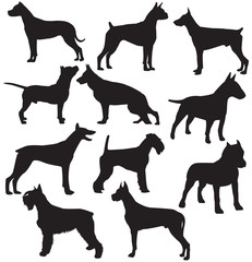 Set of sillhouttes of standing working dogs