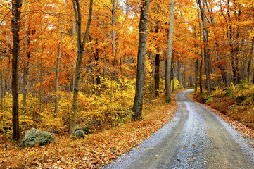 Wall Mural - Winding Mountain Road in Autumn