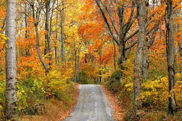 Fototapete - Autumn Scenic of Mountain Road