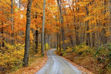 Wall Mural - Mountain Road Through Fall Colors