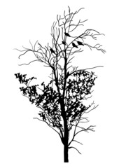 The Tree and Birds Silhouette
