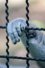 Monkey was captured in the cage in the zoo