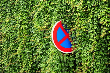 Green ivy with road sign