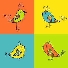 set of color birds for design