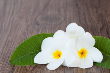Flowers Plumeria on dark wood background
