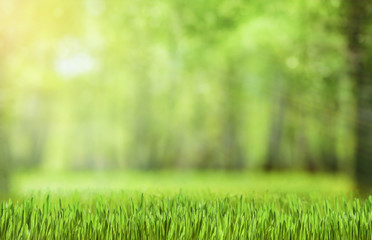 natural green forest background with sun beams