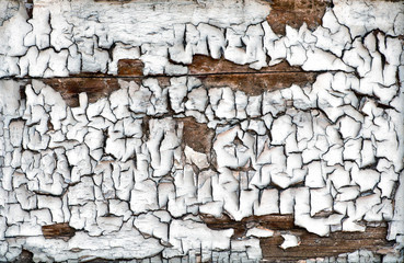 Cracked dried paint on an old wooden board