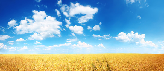 Door stickers Village Wheat field and blue sky with white clouds