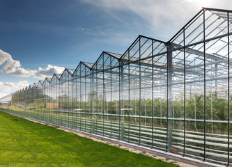 Fototapeta greenhouse vegetable production obraz