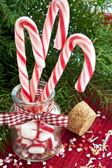 Bunch of striped candy canes on christmas fir background