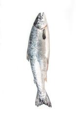 Atlantic Salmon (Salmo solar) whole fish.