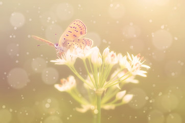 Dreamy photo of butterfly on onion flower