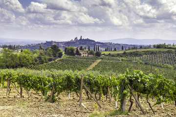 San Gimignano vineyards, Tuscany. Color image