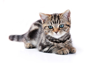 Little cute cat