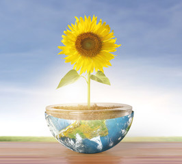 sunflower and Earth
