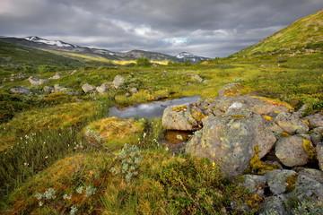 Wall Mural - Norwegia ,  krajobraz wiejski