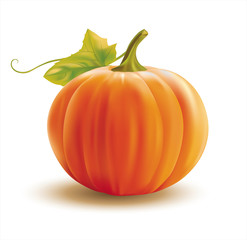 Orange pumpkin on white. Vector