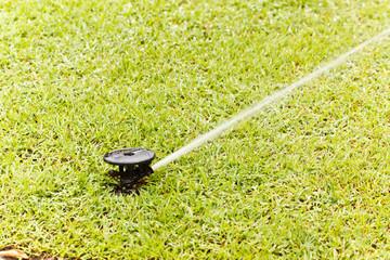 sprinkle in garden