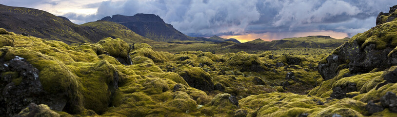 Photo sur Plexiglas Noir Surreal landscape with wooly moss at sunset in Iceland