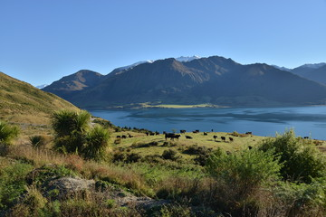 Lake Hawea landscape