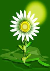 Fiore 1